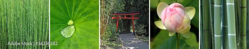 Fototapeten,tür,bambus,torii,japan