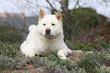 chien blanc allonge par terre