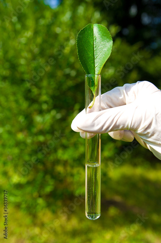 test tube with water and leaf