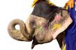 hand painted colorful elephant profile, Jaipur, Rajasthan,India