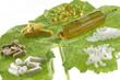 Compléments alimentaires & homéopathie