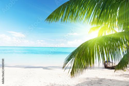 Zdjęcia na płótnie, fototapety na wymiar, obrazy na ścianę : palm and sea