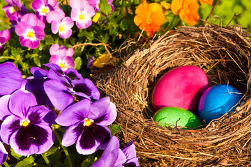 Osternest, easter eggs in a nest