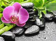 orchide rose