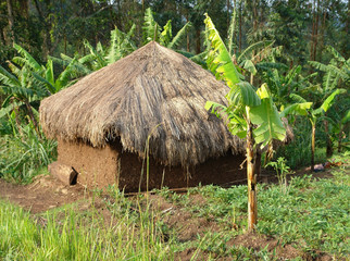 small shack near Rwenzori Mountains