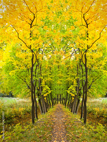 beautiful autumnal forest - 36354307