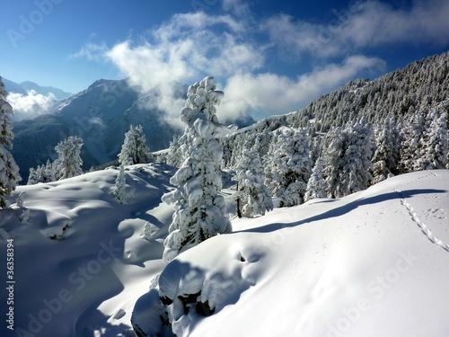 Fototapeten,winter,winterlandschaft,weihnachten,weihnachts