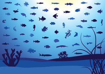 62 Fish silhouettes underwater.