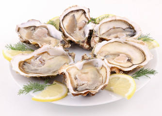 isolated plate of oysters on white