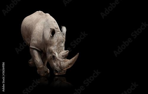 Foto op Canvas Neushoorn rhinoceros