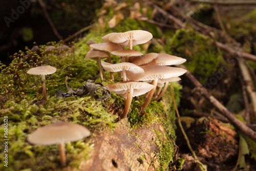 Mushrooms in green forest