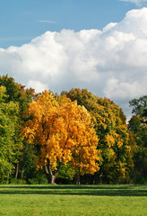 Autumn landscape with a golden oak