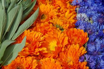 Sage,marigold,cornflower