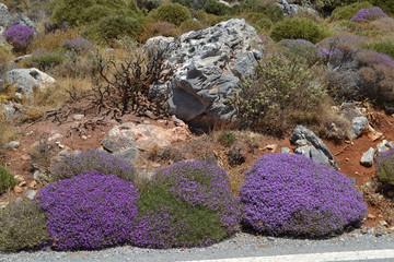 cespugli fiori viola