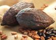 Kakaofrüchte , Kakaobohnen