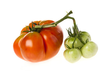 Large ripe red and immature green heirloom tomatoes