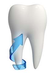 3d healthy white tooth root protection
