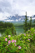 Wild roses and mountain lake in Jasper National Park