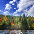Fall forest in sunshine