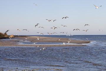 Sea gulls.