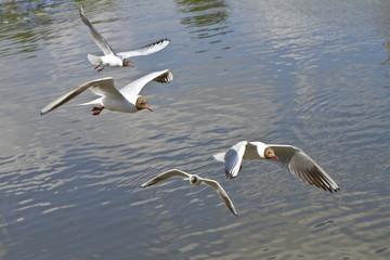 Birds soaring