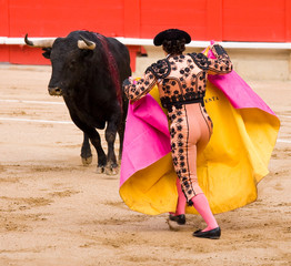 Bullfighter and bull