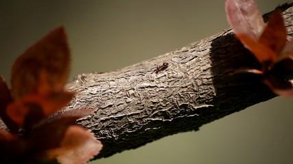 Ants Macro Shot