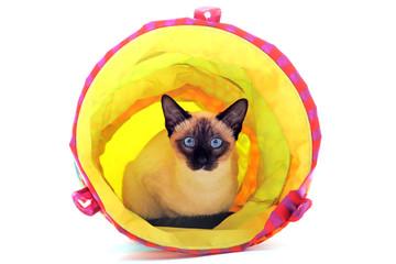 chat siamois dans un tunnel de jeu