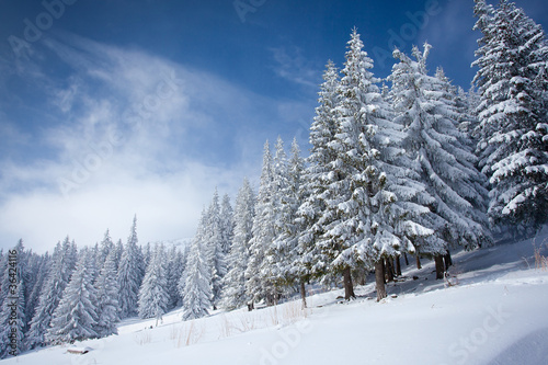Carpathian winter mountains