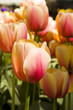 A bunch of tulip flowers