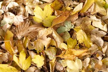 Crispy Autumn Leaves
