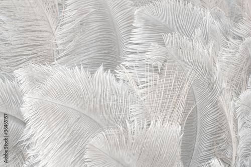 Federn Textur