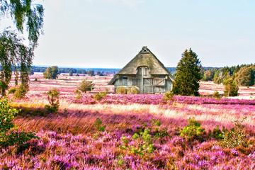 die Lüneburger Heide, HDR