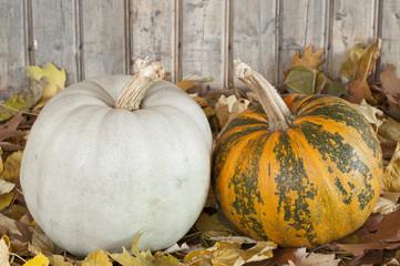 Plumpkins