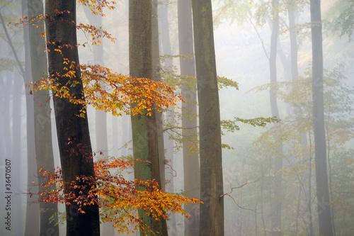 Fall © ck