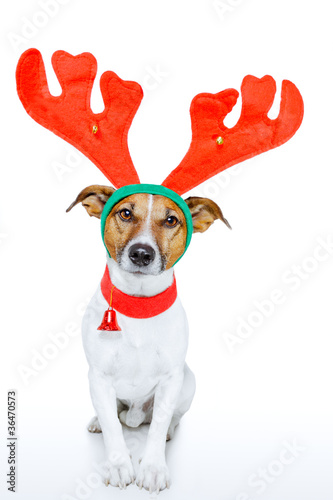 dog dressed up as deer