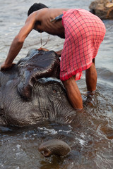 Man washing his elephant  on the banks of river