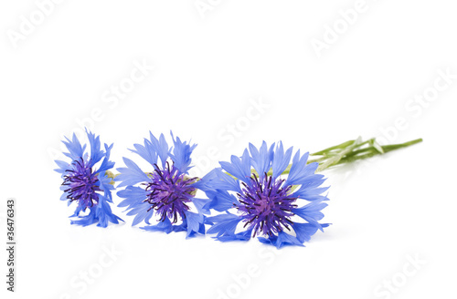 canvas print picture Cornflower on the white surface