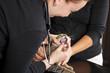 beim Tierarzt - Untersuchung entzündeter Zahn bei Katze