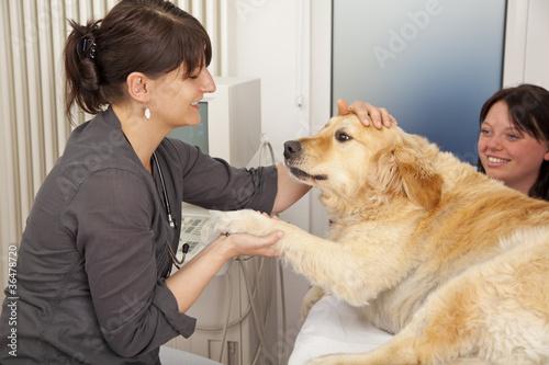 Hund auf Behandlungstisch wird von Tierärztin begrüsst