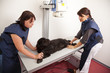 beim Tierarzt - Hund auf Röntgentisch