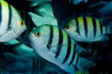 Fototapete Unterwasser - Ozean - Fische