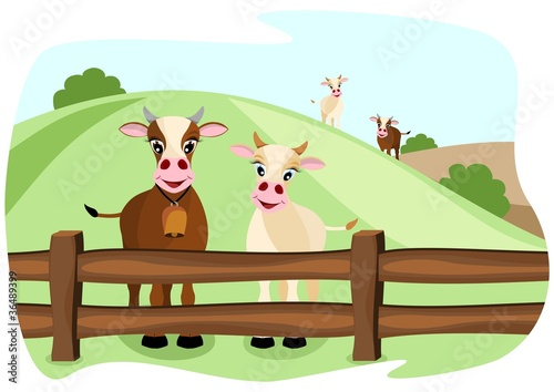 two cute cows on pasture