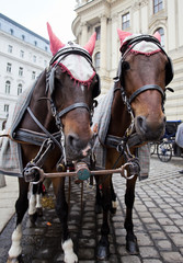 Horses in Vienna.