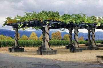 Vineyard Napa in California.