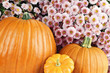 Pumpkins and Chyrsanthemums