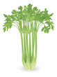 Bunch of celery illustration