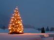 canvas print picture - Weihnachtsbaum im Garten bei Dämmerung
