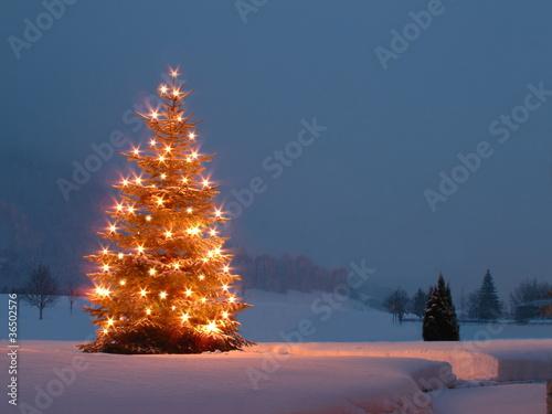 canvas print picture Weihnachtsbaum im Garten bei Dämmerung