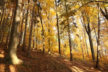 Autumn landscape of mixed forest on the slope on a sunny morning